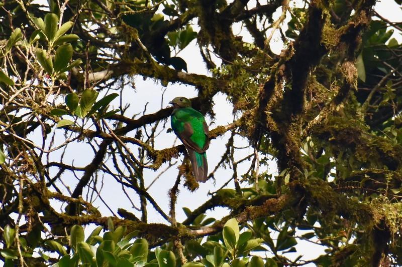 Bosque Nuboso Monteverde, Puntarenas, Costa Rica
