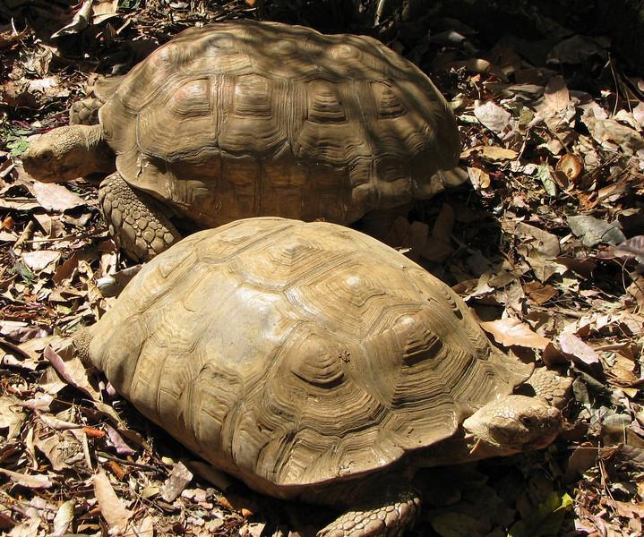 ZooAve - Tortoise Couple