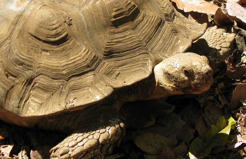 ZooAve - Tortoise