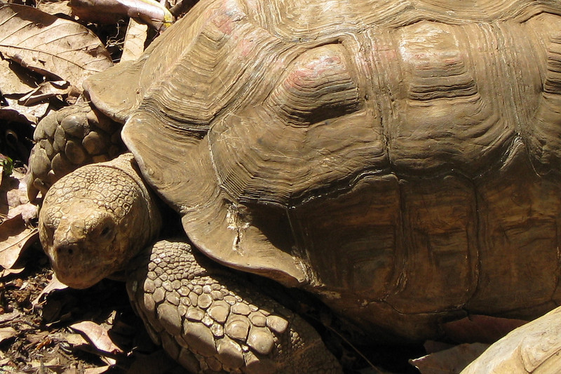ZooAve - Tortoise_2