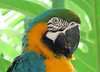 ZooAve - Blue and Gold Macaw_7