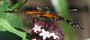 San Jose Butterfly Garden - Passionflower Butterfly_2