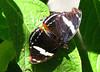 San Jose Butterfly Garden