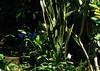 San Jose Butterfly Garden - Three Morph Butterflies