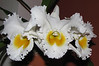 Homestay - Orchids