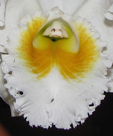 Homestay - Orchid Close-up