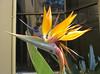 San Jose Children's Museum - Bird Of Paradise