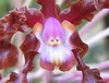 Homestay Garden - Orchid Face