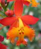 Homestay Garden - Orchid