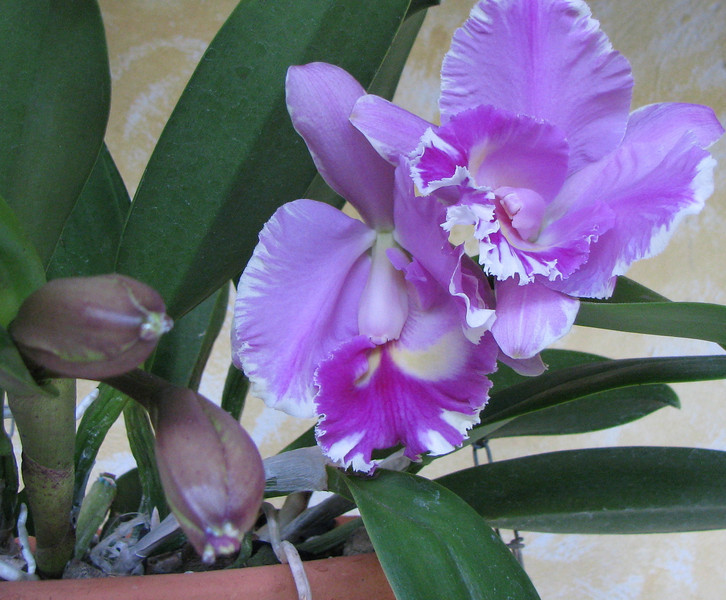 Homestay - Orchids And Buds