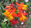 Homestay Garden - Orchids