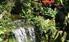 San Jose Butterfly Garden - Waterfall Area
