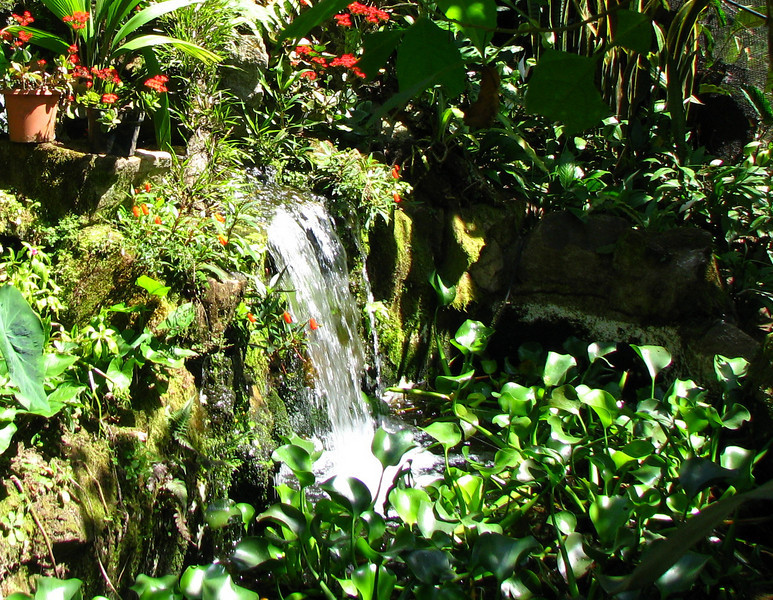 San Jose Butterfly Garden - Waterfall and Pond Area