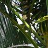 San Jose, 16th January, Tennessee Warbler