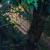 Selva Verde rainforest