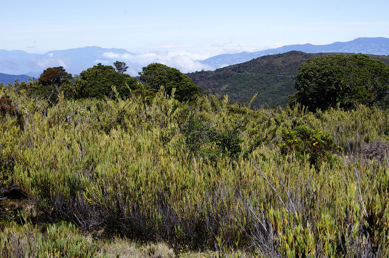Cerro de la Muerte, 16th January 2017, Paramo
