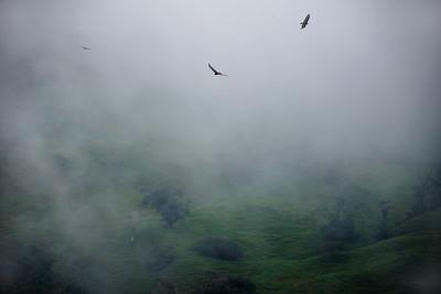 Cloud Forest Mountain Birds
