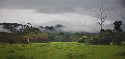 Jungle Edge