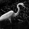 """In a New Light: Costa Rica - """"Egret"""""""