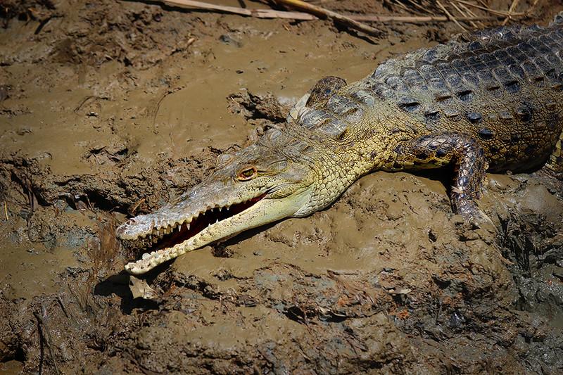 In a New Light: Costa Rica - Croc