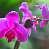 National Orchid