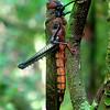 """In a New Light: Costa Rica - """"Grasshopper"""""""
