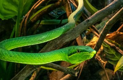 Snake in Jardin Botanico / Parque Zoologico