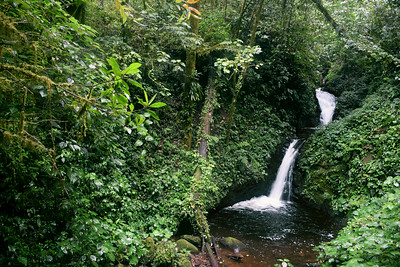 Cloud Forest Falls