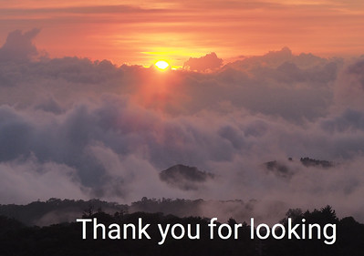 Sunset in the Cloud Forest:  Monteverde