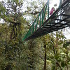 walking a series of nine elevated bridges in the Selvatura park