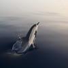 Mar de Alborán. Campaña Protección a Toda Costa