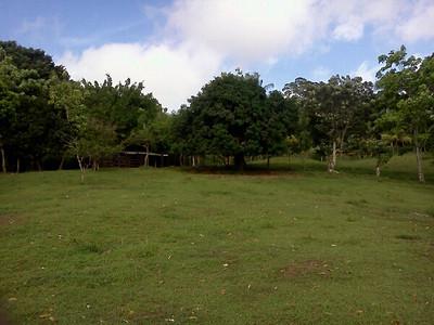 Barn & where the horses & buffalo graze
