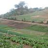 Internal road & vegetables in terraces.