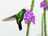 Garden Emerald - Rancho Naturalista