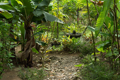 Butterfly garden at Hacienda Baru