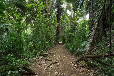The jumbled jungle