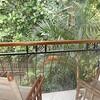 Upstairs Balcony overlooking the lush tropical Garden•Backyard & Creek below
