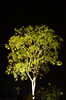 A tree illuminated at night in Costa Rica, Central America.