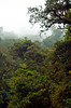 Views of the cloud forest jungles and vegetation in Monteverde, Costa Rica, Central America.