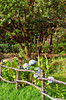 A rustic fence and Hydrangea flowers in Monteverde, Costa Rica, Central America.