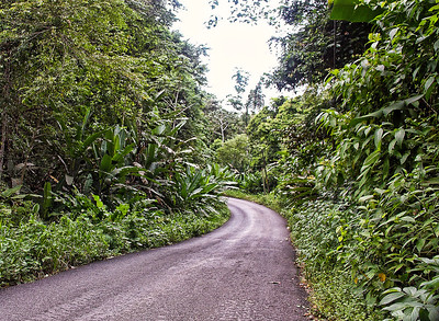 jungle-road