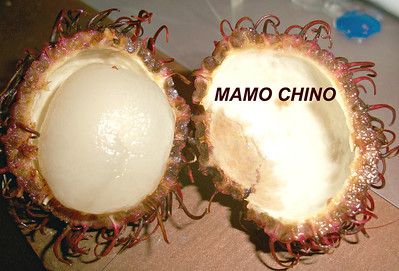 "Mamon Chinos, MamonChinos -  or as I refer to them - ""Hairy Balls"" because THAT's what I call them!!!"