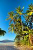 Decorative palm trees along the beach and shoreline at Tamarindo, Costa Rica, Central America.