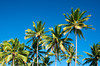 Palm trees along the coast at Tamarindo, Costa Rica, Central America.