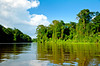 Dense tropical jungle vegetation along the canals of Tortuguero National Park, Costa Rica, Central America.
