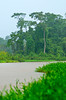 Dense tropical jungle vegetation along the canals of Tortuguero National Park, Costa Rica, Central America.