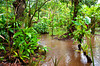 Scene of the wet forest jungle at the Pachira Lodge, Tortuguero National Park, Costa Rica, Central America.