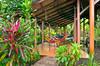 Pachira Lodge facilities at Tortuguero National Park, Costa Rica, Central America.