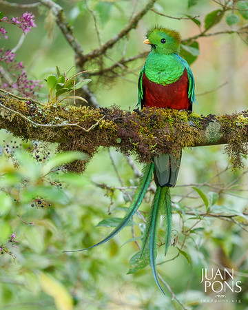 Costa Rica Wildlife Adventure | Photo Workshop