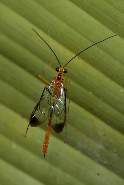 really cool bug